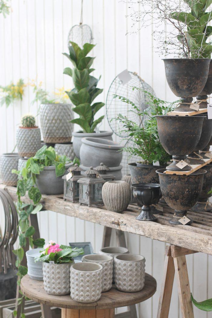 Åbergs trädgård gråsvart